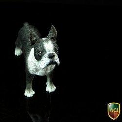 画像2: ACI 1/6 ボストンテリア Boston Terrier   *お取り寄せ