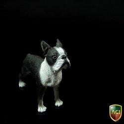 画像1: ACI 1/6 ボストンテリア Boston Terrier   *お取り寄せ