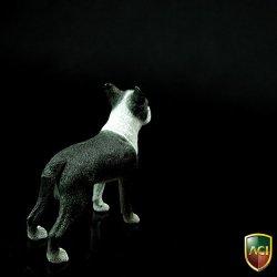 画像5: ACI 1/6 ボストンテリア Boston Terrier   *お取り寄せ