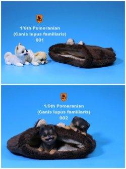 画像1: Mr.Z 1/6 ポメラニアン 2種&クッション セット MRZ020 *お取り寄せ