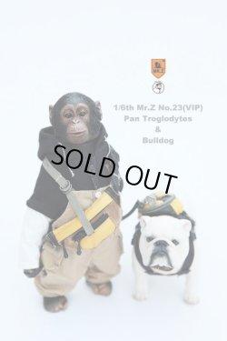 画像1: Mr.Z 1/6 チンバンジー & ブルドッグ セット MRZ023 (VIPバージョン)  *お取り寄せ