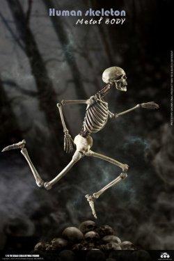 画像1: COOMODEL 1/6 ヒューマン スケルトン メタル ボディ 骸骨 ダイキャスト合金製 アクションフィギュア BS011 *予約