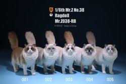 画像1: Mr.Z 1/6 ラグドール 5種 MRZ038 *お取り寄せ