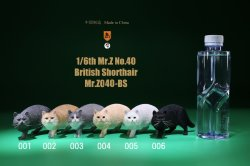 画像1: Mr.Z 1/6 ブリティッシュ ショートヘア 6種 MRZ040 *お取り寄せ